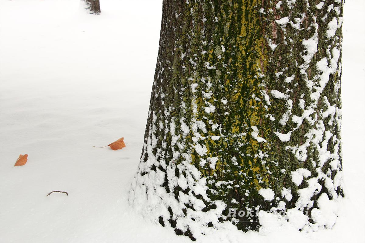 雪の札幌大通公園と樹木