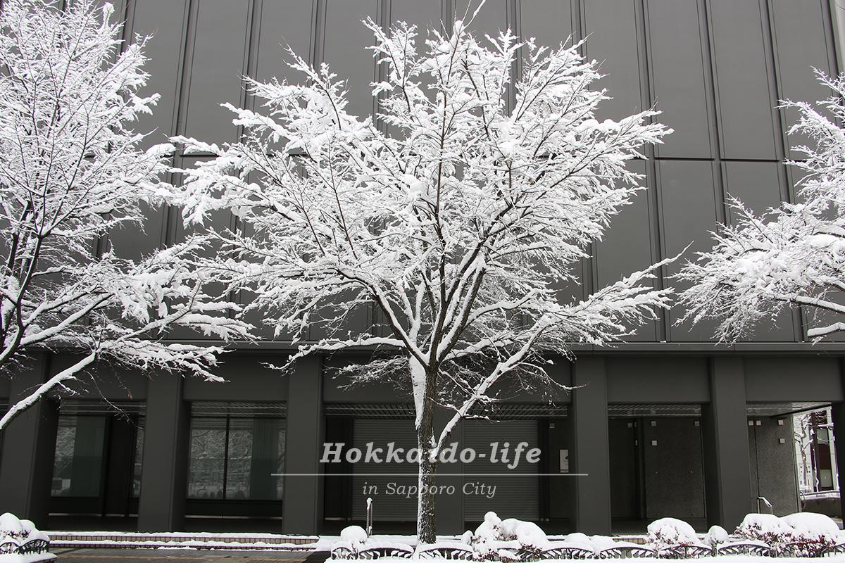 雪の札幌大通公園近くの木