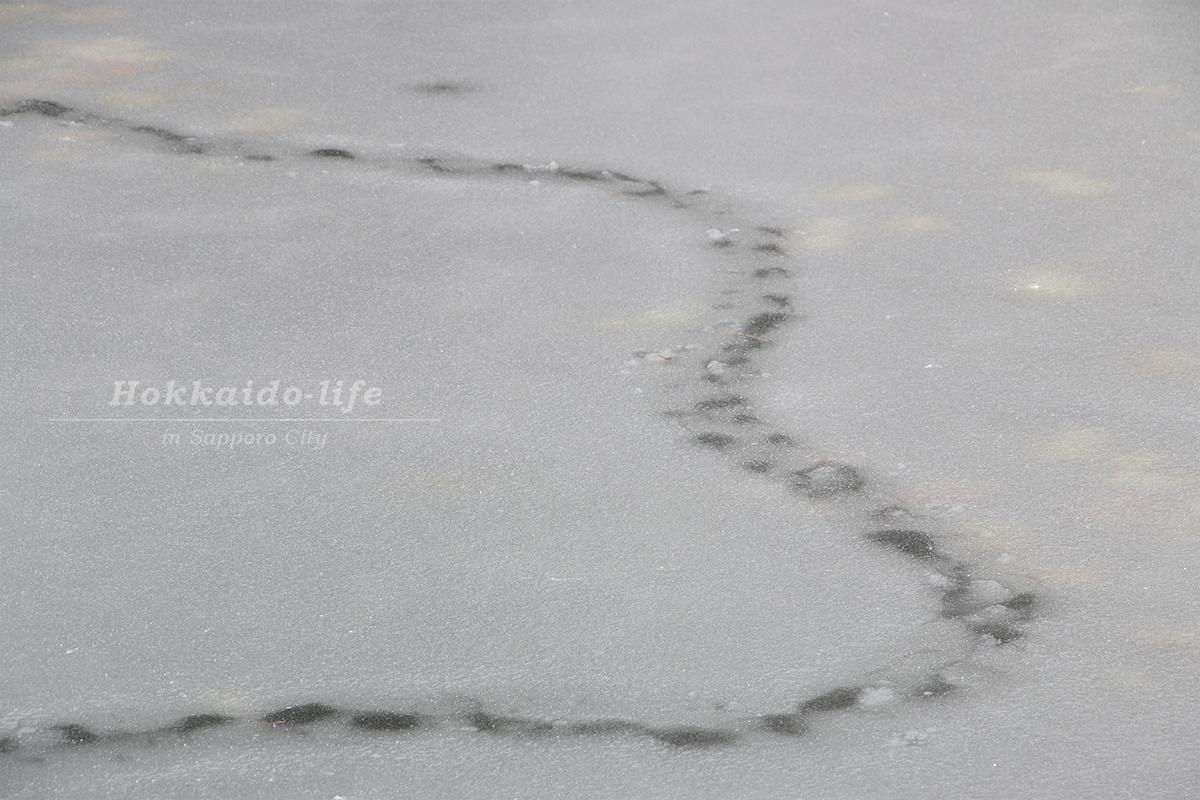 北海道庁の池