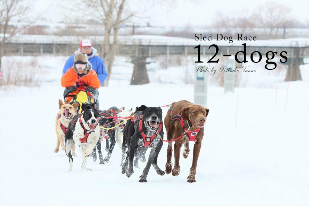 旭川の犬ぞりレース 12頭引き