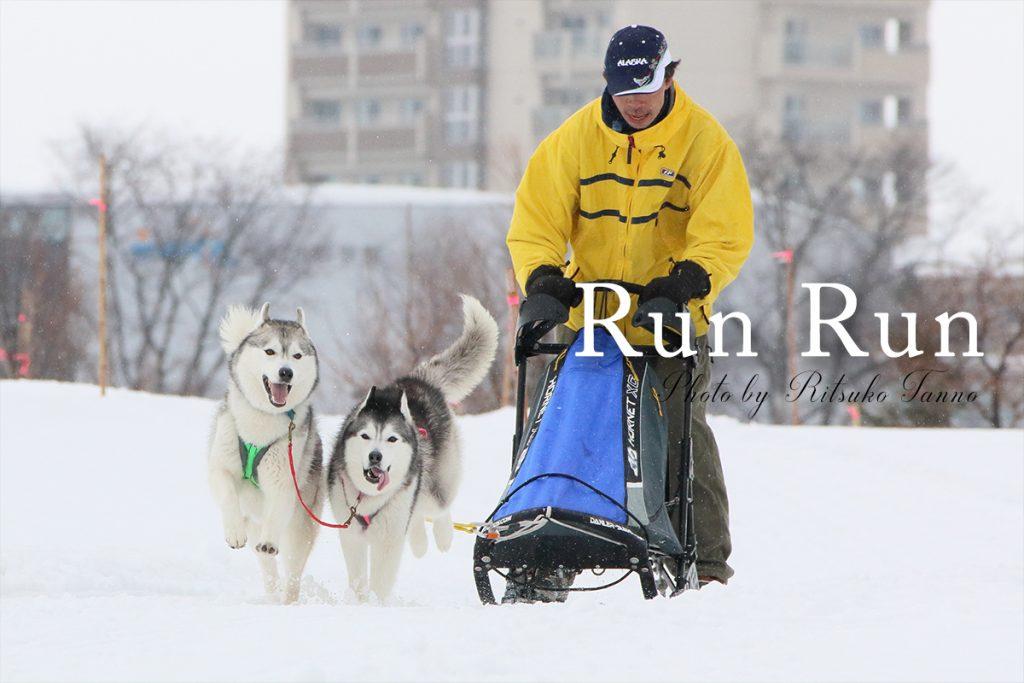 旭川の犬ぞりレース 2頭引き