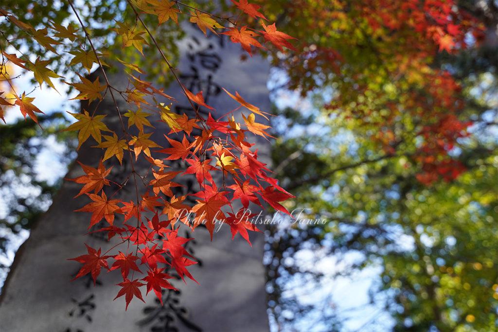 岩見沢の秋(紅葉)