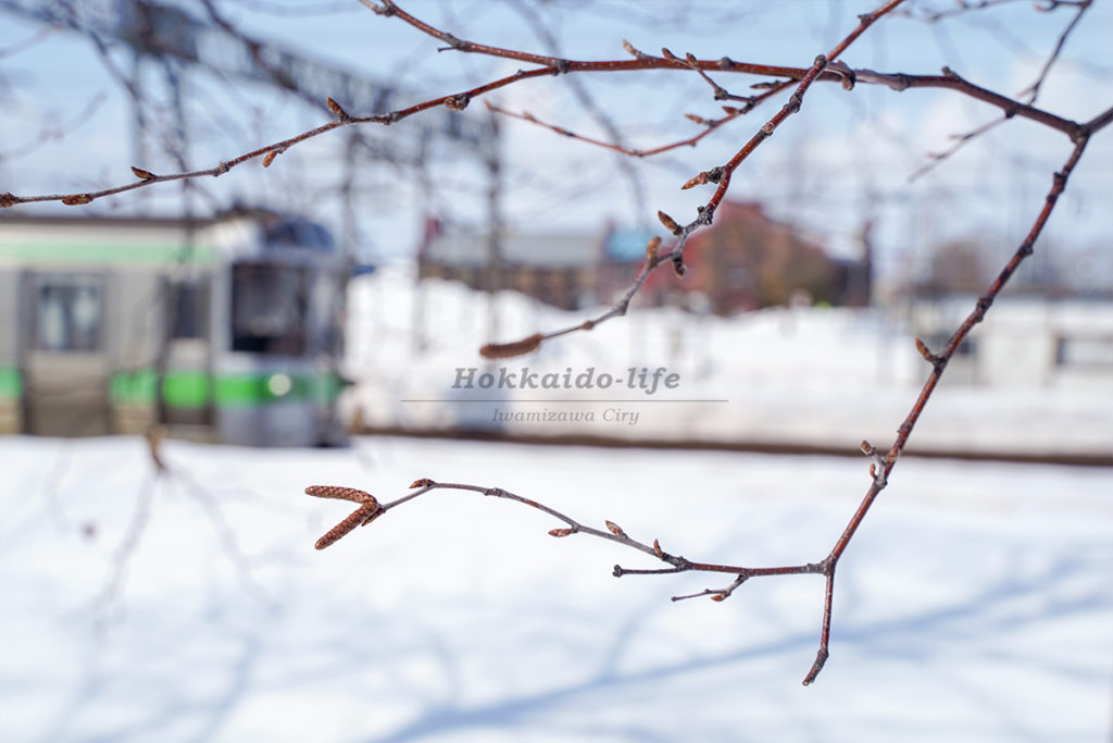 遠い春の息吹を探す傍らを走るローカル列車
