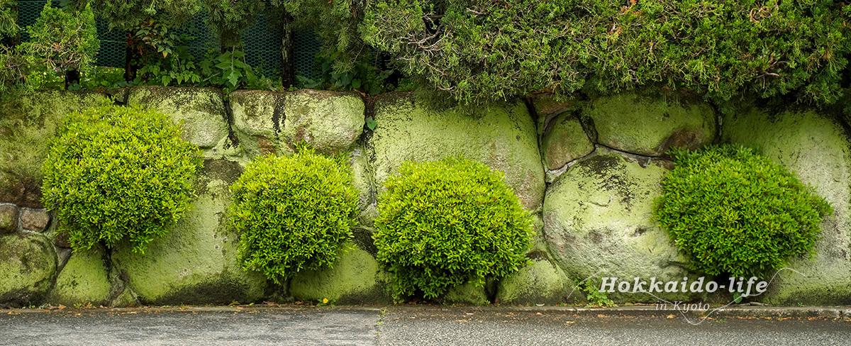 京都あるき(2)5月の彩を母と探す