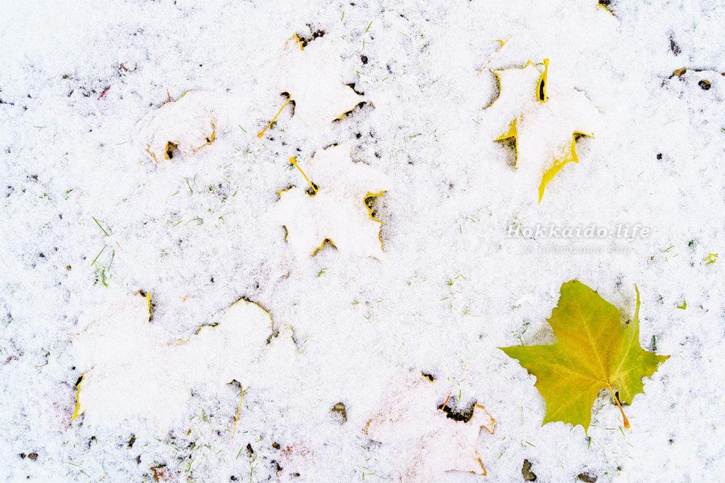 暴風雪予報が暴風にとどまった11月中旬の朝