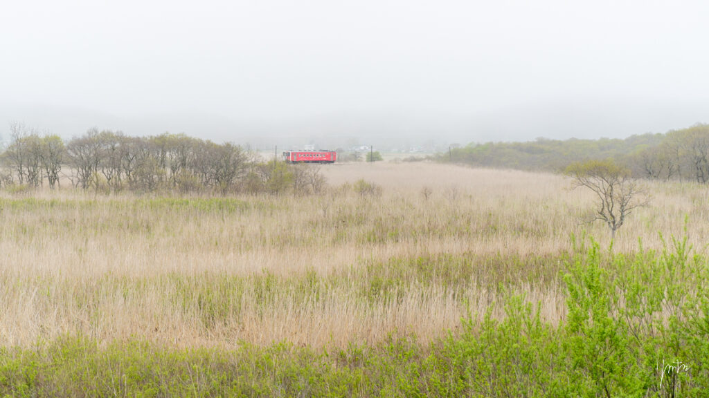 薄霧を走る花咲線(ラッピングトレイン)