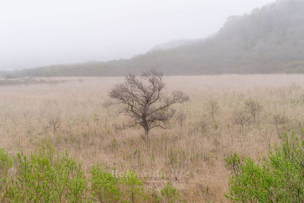 荒野で生きる木
